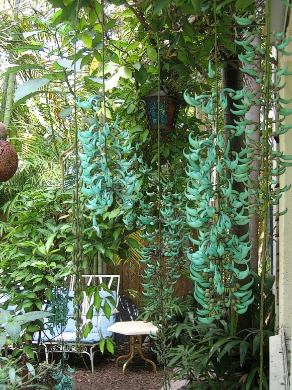 Jade Vine Post Cottage 2 14 08